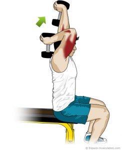 extension-des-avants-bras-assis